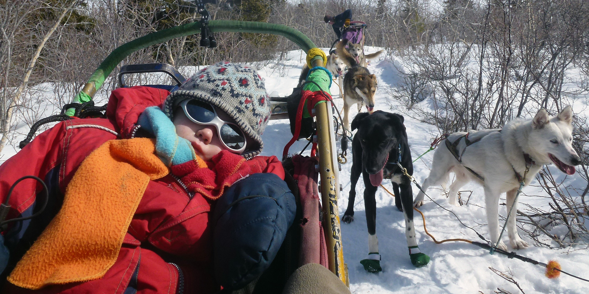 Into the Wild Adventures, dog sledding tours and winter adventures in the Yukon Territory, Canada - About Us
