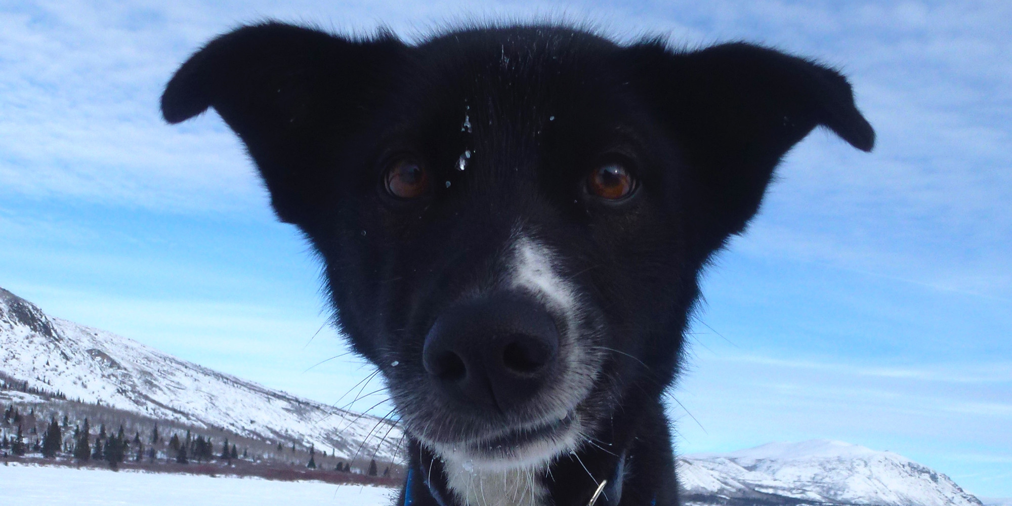 Into the Wild Adventures, dog sledding tours and winter adventures in the Yukon Territory, Canada - Mushing 101