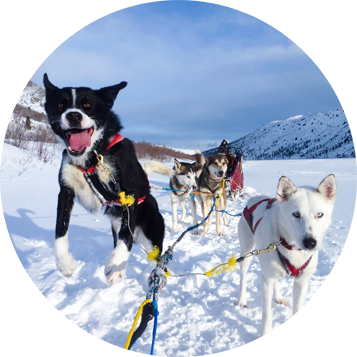 Into the Wild Adventures, dog sledding tours and outdoor adventures in the Yukon Territory, Canada - Full day tours