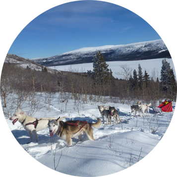 Into the Wild Adventures, dog sledding tours and winter adventures in the Yukon Territory, Canada - Half day tours