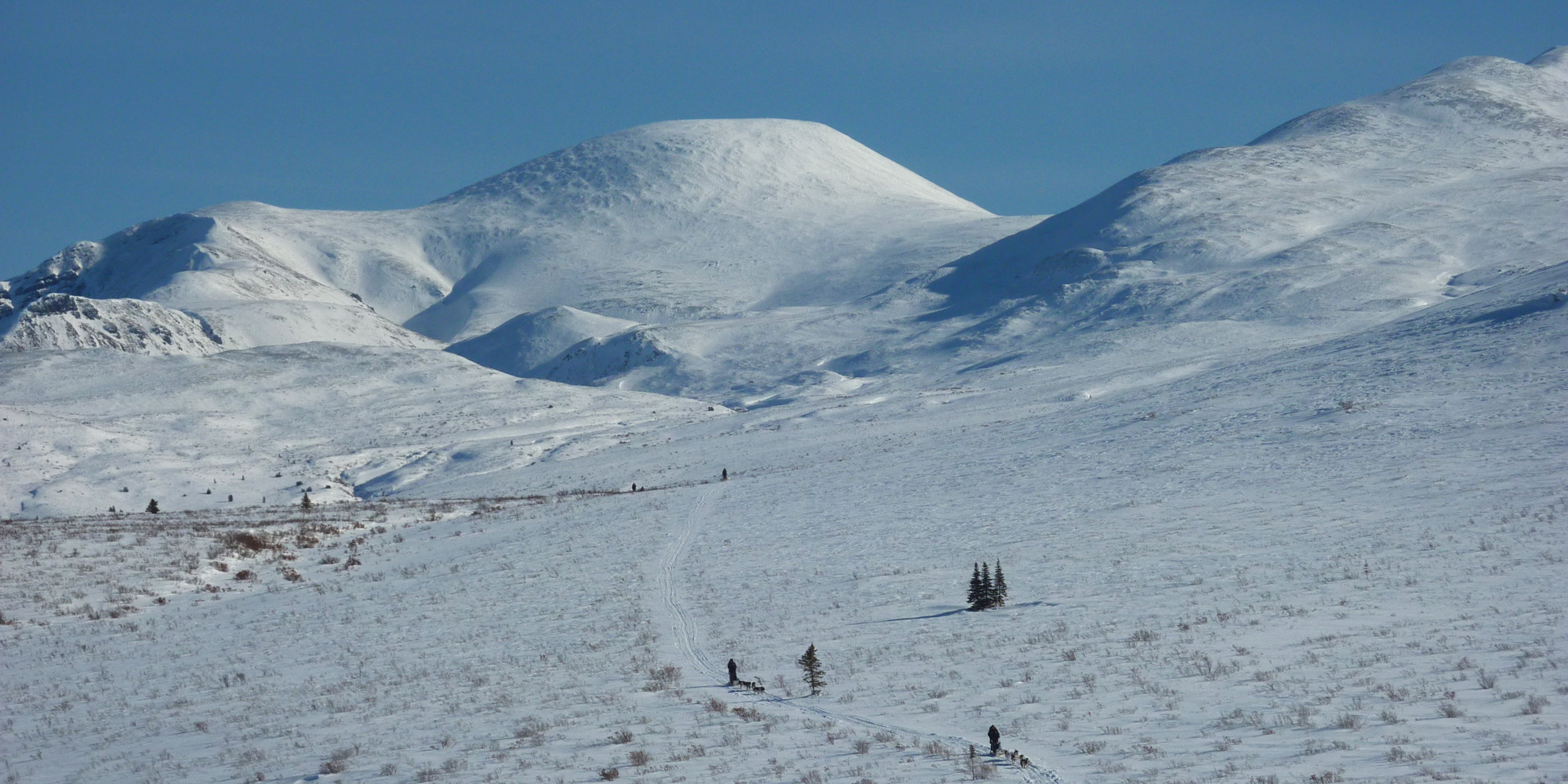 Into the Wild Adventures, dog sledding tours and winter adventures in the Yukon Territory, Canada - Contact Us
