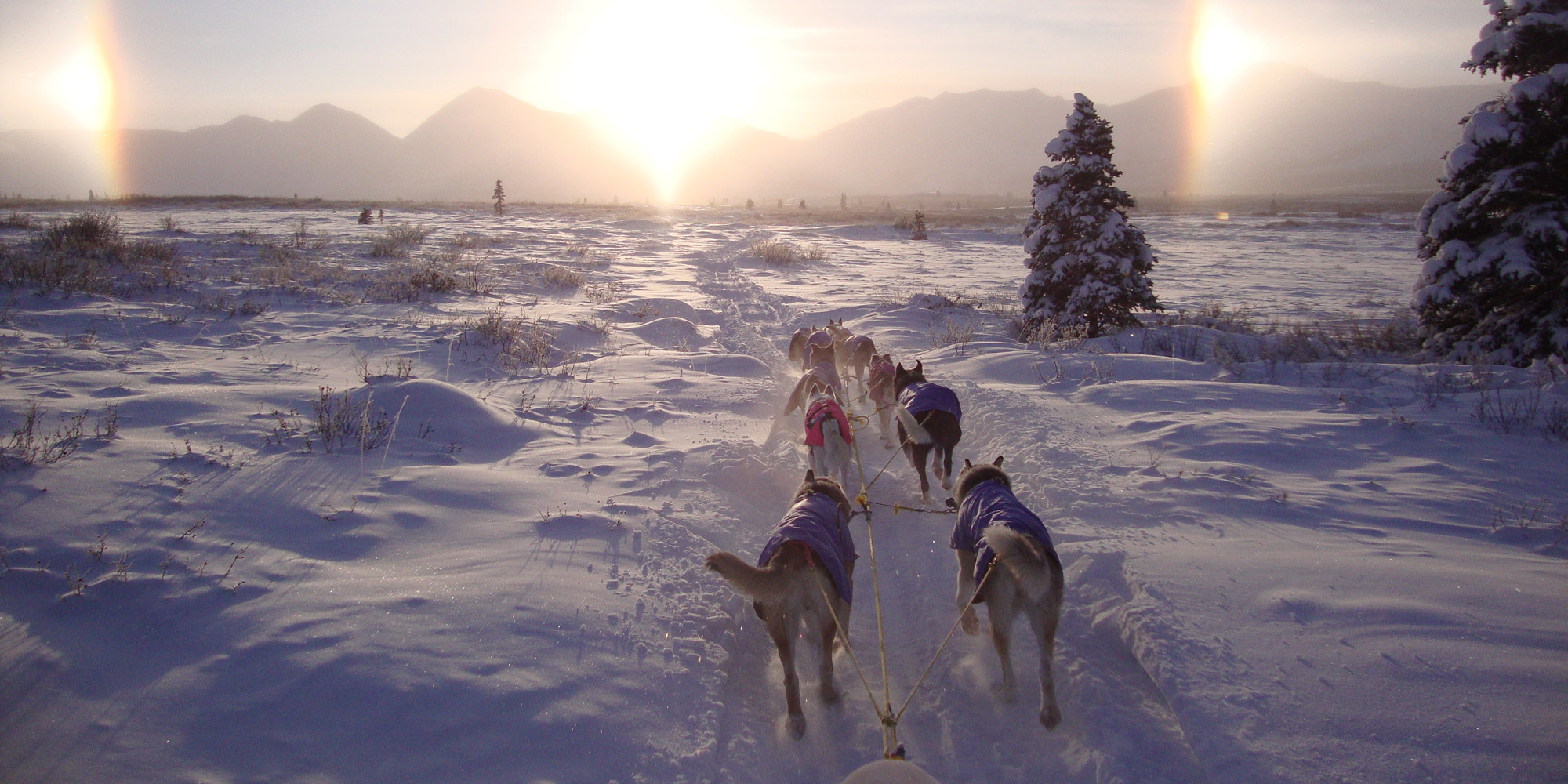 Into the Wild Adventures, dog sledding tours and winter adventures in the Yukon Territory - Booking form